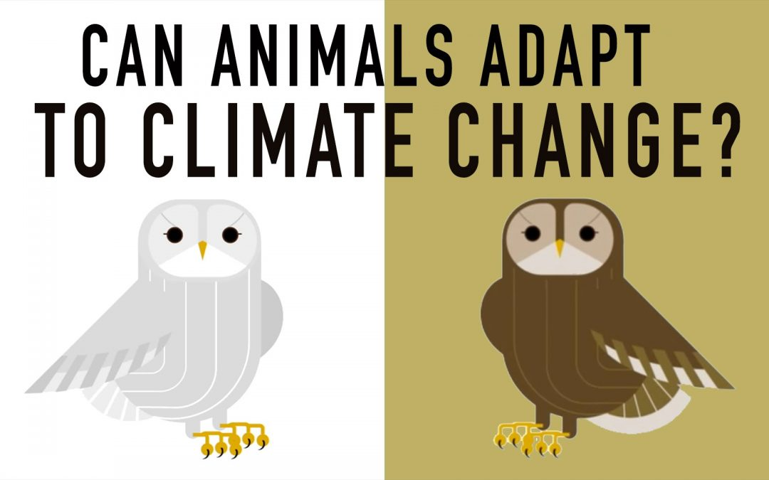 Can Wildlife Adapt to Climate Change? – Erin Eastwood
